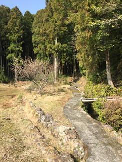 熊野古道 山道に入っていく!