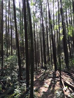熊野古道 大変気持ちが良い