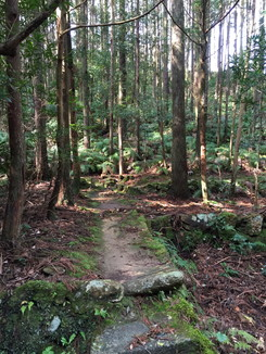 更に熊野古道を進む