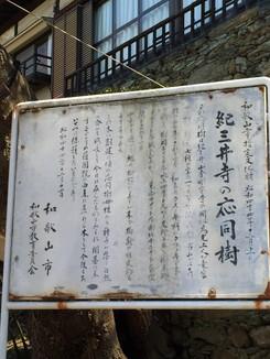 紀三井寺の応同樹