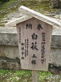 仙台藩伊達政宗(だてまさむね)公 縁の 白萩 五株