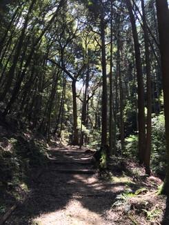 登りの山道が続きます