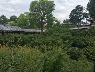 通天台から通天橋、洗玉澗を望む。